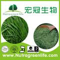 Natrual de hierba de cebada en polvo jugo, 100-200mesh, orgánicos certificados