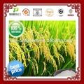 Fábrica de fornecimento natural 95% 99% farelo de arroz natural de ácido ferúlico