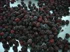 hot sale IQF frozen blackberry best price export