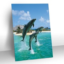 3d picture animal animation of marine animal painting