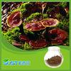 Herbal medicine 50% ganoderma lucidum lingzhi reishi mushroom extract
