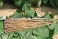 Bang niu gen de raíz de bardana arctium lappa l. A base de hierbas de la medicina