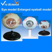 Eye model ,Enlarged eyeball model, Anatomical model
