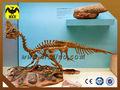 HLT fossili e parco a tema di dinosauri scheletro di dinosauro replica