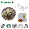 Natural Selaginella Tamariscina Extract, 20% - 98% Amentoflavone