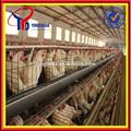 حار بيع 2014 مزرعة دجاج بيض الدواجن(iso9001)