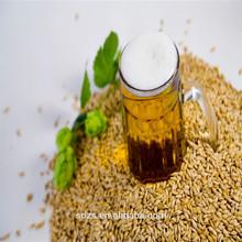 good quality of bulk raw beer barley grain for sale
