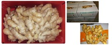 China fresh dry skin ginger