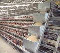 وهناك نوع طبقة التلقائي/ الدجاجةالراتنج/ الإمارات العربية المتحدة الدجاج/ الطيور الدواجن المعدات الزراعية للبيع