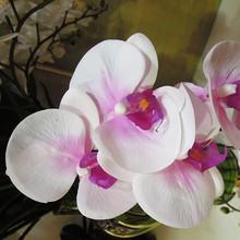 giga premium toque de orquídeas real el arreglo de flores para la celebración