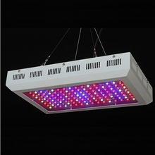 Red/Blueled grow lamp,600w Indoor LED Grow Light(CE&ROHS) passed