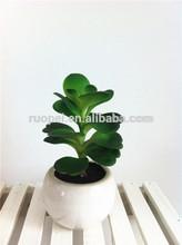 China factory mini succulent plants for decoration