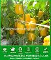 ハイブリッドnsp06aihuangcapsium黄色種野菜