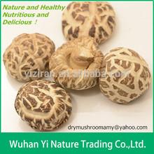 Dried Edible Flower Mushrooms Wholesale
