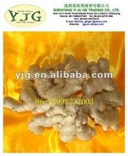 fresh ginger wholesale in new season