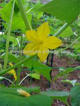 PE + UV plant support net Pea & Bean Netting