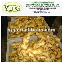 2014 natural mature fresh ginger for exporting