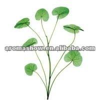 1kg Centella Selected Triterpenes, Asiaticoside+Free genins >95%