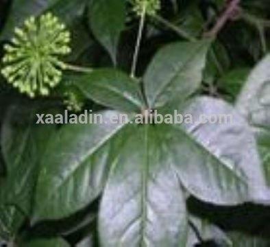 Best Quality & Best Price Black cohosh Extract CAS: 84776-26-1/Triterpenoides 2.5%