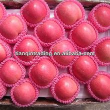 shandong fresh red fuji apple exporter
