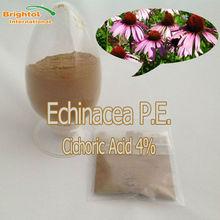 High Quality Echinacea Purpurea Herb Extract 4% Phenolic