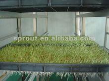 Multi-function Sunflower Shoots/Alfalfa Grass Machine