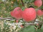 new huaniu apple