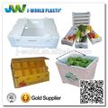 pp corrugado de frutas y verduras de los contenedores