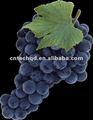 raisins rouges frais de globe