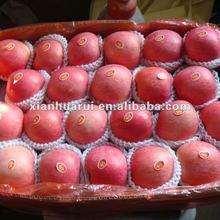 2013 Chinese Red Fresh Qinguan Apple