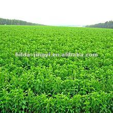 Healthy Sweetner/Pure Stevia/Stevia Extract/Stevioside/High Rebaudioside 40-99%