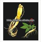 Ginseng Root P.E.