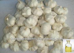 GMP & KOSHER Manufacturer supply Garlic P.E.