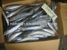 Mackerel fish from China 2013