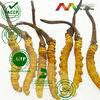 100% Natural Cordyceps Extract/ Yarsagumba extract powder (20%~80% polysaccharide)