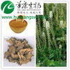 High Quality Black Cohosh Extract Supplier