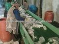 Garrafa de plástico PET / flocos de lavar / linha de reciclagem / máquina