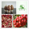 100% Natural Fruit P.E. Powder Hawthorn