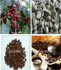 arabic coffee green bean