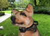 Petsafe Bark Control Dog Training Collar