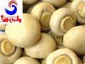 Conserve blanc bouton champignons