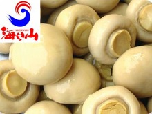 canned white button mushroom