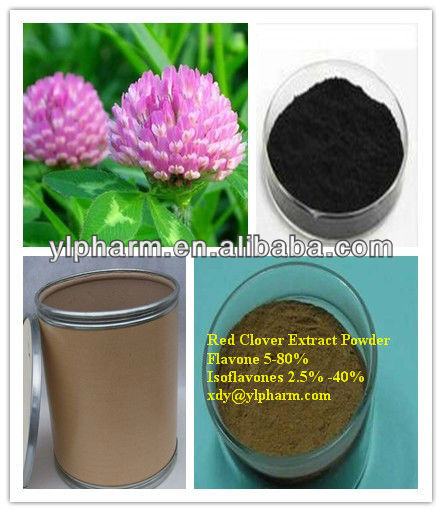 isoflavone red clover extract,Red Clover Extract Powder,Isoflavones 2.5% -8%