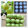 2014 New crop fresh pear fruit fresh su pears for sale