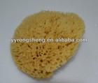 nature sea sponge