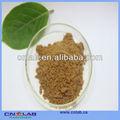 wasserdampf behandelt brunnenkresse pulver