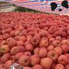 Fresh Chinese Red Fuji Apple Fruit