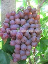 Fresh Red Globe Grapes
