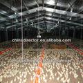 aves de capoeira de frangos de corte de aço casa construção de galpão de frango