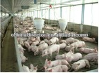 steel pig farm house